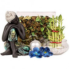 Deals, Discounts & Offers on Home Decor & Festive Needs - Flat Rs 50/- off on Plants Category