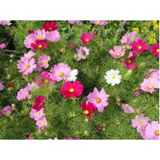 Deals, Discounts & Offers on Home Decor & Festive Needs - Flat 33% off on E-plant Summer Floral Seed