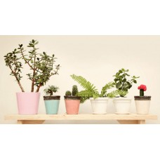 Ferns N Petals Offers and Deals Online - Plants & Green Gifts Online offer
