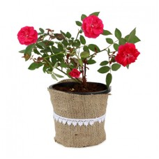 Deals, Discounts & Offers on Home Decor & Festive Needs - Flat Rs. 50 off on Plants category